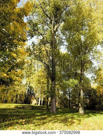 Autumn Landscape With Yellow And Other Foliage On Tree Branches In The Daytime, Maple Trees And Othe