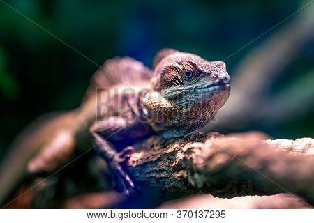 Chameleon Eye, Macro Photography Of A Chameleon