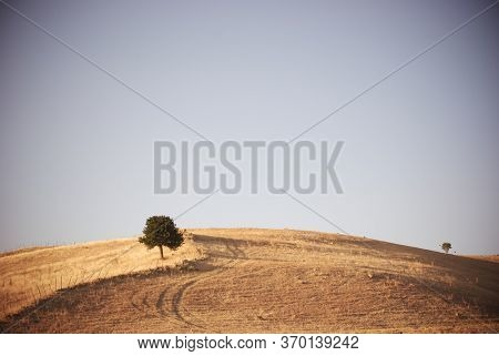 vintage rural landscape of Sicily field with alone tree on the hill