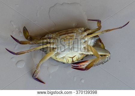 Ventral View Of Blue Manna Crab, Sand Crab. Flower Crab. Portunus Pelagicus Isolated On A White Back