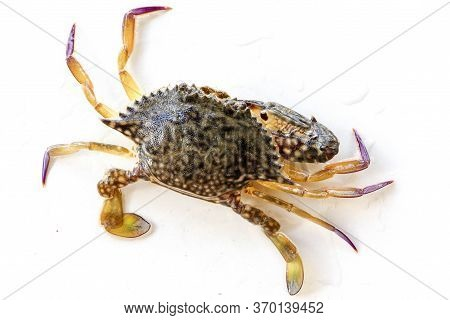 Dorsal View Of Blue Manna Crab, Sand Crab. Flower Crab. Portunus Pelagicus Isolated On A White Backg