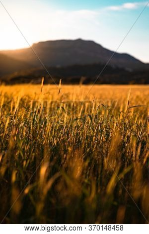 Sunset Over Wheat Field And Mountain In The Background With Copy Space