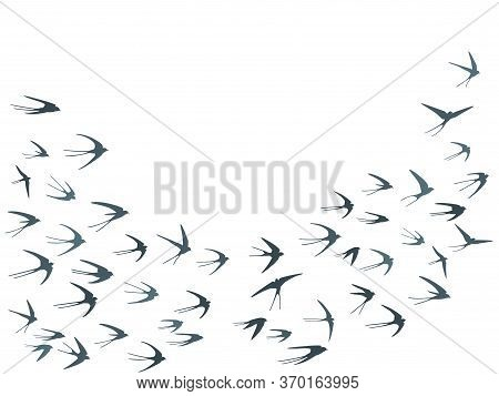 Flying Martlet Birds Silhouettes Vector Illustration. Migratory Martlets Swarm Isolated On White. Wi