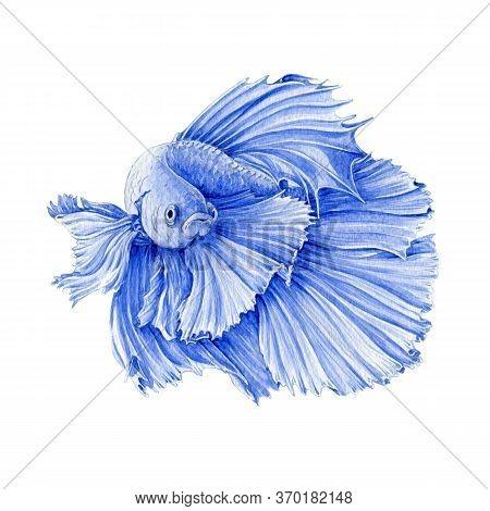 Watercolor Illustration Of A Blue Exotic Fish. Hand Drawn Beautiful Betta Aquarium Fish. Isolated On