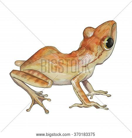 Watercolor Orange Frog Illustration. Hand Drawn Wild Small Forest Amphibian. Isolated On White Backg