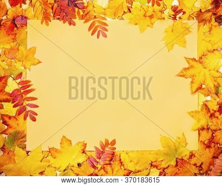 Frame Of Beautiful Fall Leaves With Yellow Empty Paper Sheet In Center. Empty Blank For Greeting Car