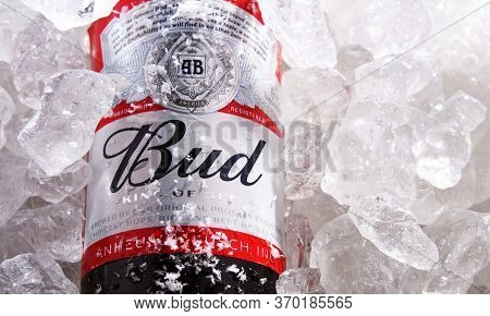 Bottle Of Bud Beer In Crushed Ice