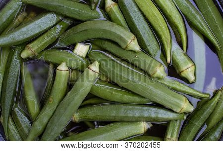 Fresh Okra Or Lady Finger Vegetable In Water For Washing, Perfect For Background