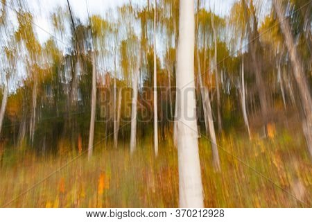 Vertical Motion Blur Of Forest Impressionism Background With Strong White Tree Trunk.