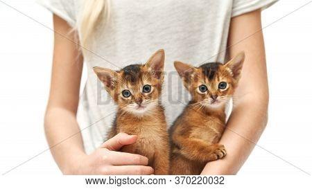 Girl Stroking Her Two Little Red Kittens