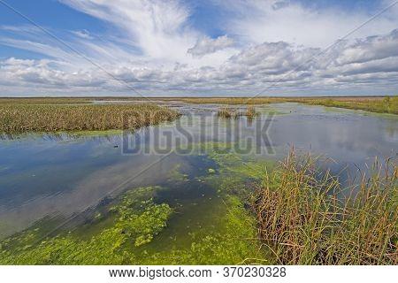 Panoramic View Of The Remote Wolfweed Wetland In San Bernard Wildlife Refuge In Texas
