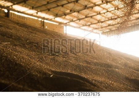 Pile Of Heaps Of Wheat Grains At Grain Elevator.