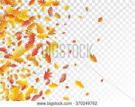 Oak, Maple, Wild Ash Rowan Leaves Vector, Autumn Foliage On Transparent Background. Red Orange Gold