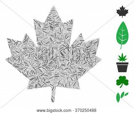 Hatch Mosaic Based On Maple Leaf Icon. Mosaic Vector Maple Leaf Is Formed With Scattered Hatch Eleme
