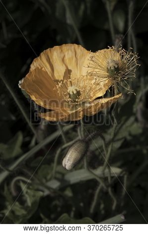Yellow Flower Showing Stamens Close Up Macro