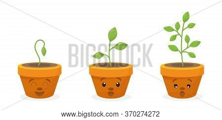 Young Baby Green Plants Growing In Germination Sequence On Plastic Pot With Fertile Soil.