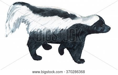 Realistic Watercolor Image Of Striped Skunk Isolated On White Background.