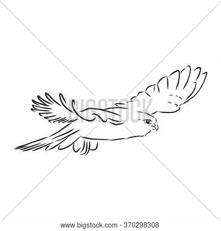 Black And White Illustration. Sketch Of Bird Detailed Hand Drawn Eagle For Tattoo On Back. Falcon Bi