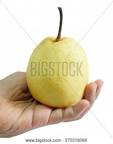 Fresh Fruit, Hand Hodling Sweet Nashi Pear, Asian Pear Or Pyrus Pyrifolia Fruit Isolated On White Ba