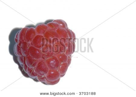 Raspberry Close Up On White Background