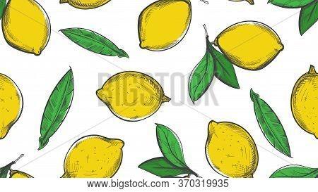Citrus Sketch Pattern. Summer Lemon Background. Botanical Vintage Grunge Citric Seamless Texture. Ve