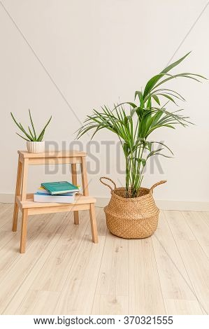 Plant Howea And Aloe Vera With Books. Vertical Format. Plant Home Decoration