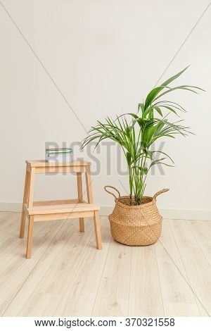 Plant Howea In Wicker Basket And Books. Vertical Format. Plant Home Decoration