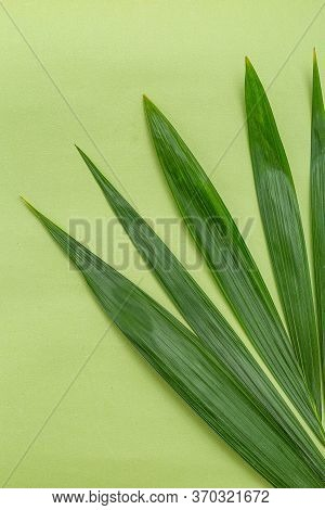 Green Natural Palm Leaves On A Green Background. Green Monochrome. Vertical Format