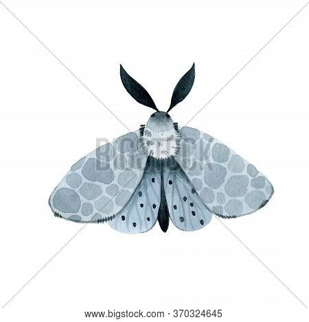 Blue Night Moth, Indigo Butterfly Watercolor Vintage Illustration, Hand Drawing, Natural Isolated