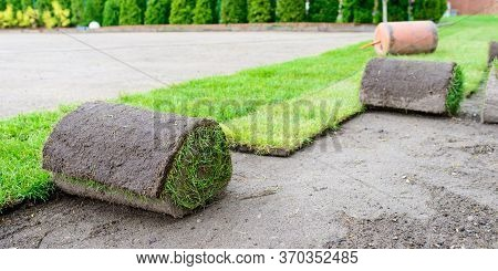 Green Grass In The Garden - Laying Lawn From A Roll - Sod For New Lawn