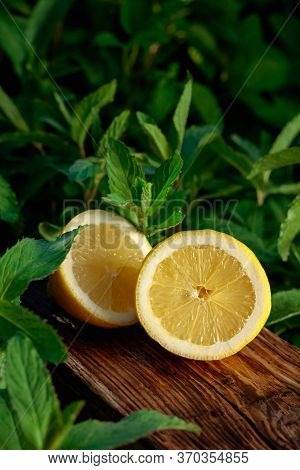 Lemon And Growing Mint In The Garden. Lemon And Mint On An Old Wooden Background.
