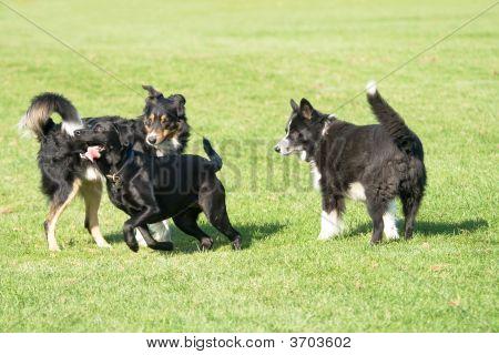 Three Black Dogs