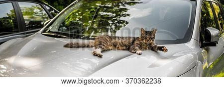 White Cat Stretching On Blue Car Bonnet.