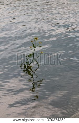 Detail Of A Very Small Waves Of The Water In A Dam, With A Growing And Blooming Wild Plant. Dam (res