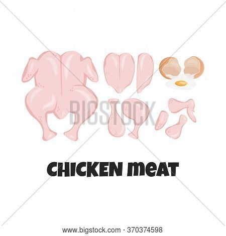 Vector Flat Set Of Raw Fresh Chicken Meat Parts Isolated. Concept Design Of Whole Chicken, Breast, B