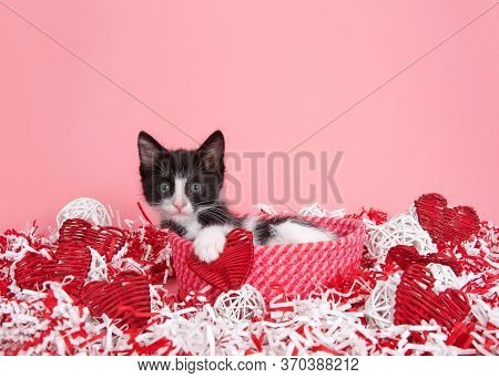 Small Black And White Tuxedo Kitten Peaking Out Of A Red And Pink Woven Basket Surrounded By Red And