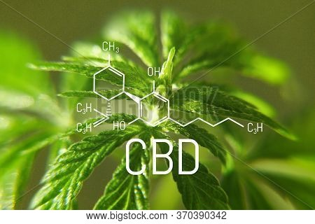 Cbd Formula On Macro Background With Hemp Green Leaf, Concept For Growing Cannabis For The Productio