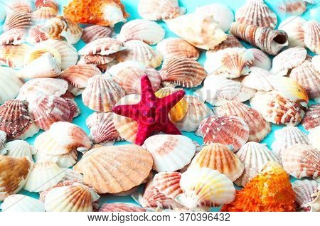 Sea Background Made Of Colored Seashells. Summer Time Or Hello Summer. Creative Copy Space For Proje
