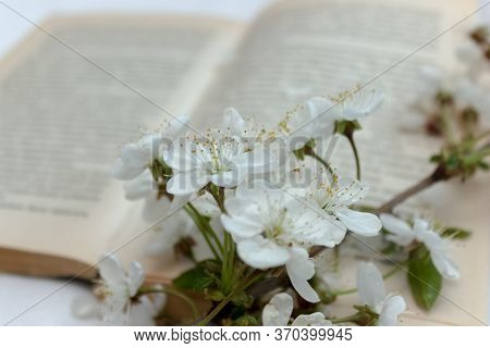 Open Book With Blossom Branch Of Cherry-tree. A Branch Of A Blossoming Apple Tree Or Cherry On An Op