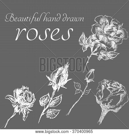 Set Of Isolated Hand Drawn Roses. Cute Flower Illustration In Freehand Style. Rose Vector Set By Han