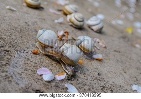 Seven Little Snails With Beautiful Shells. Seven Little Snails With Beautiful Shells. Three Snails C