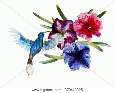 Blue Small Flying Humming Bird Violet Sabrewing Fly Into The Blue And Purple Petuny Flowers. Abstrac