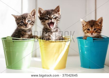 Three funny kittens sitting inside colorful pots