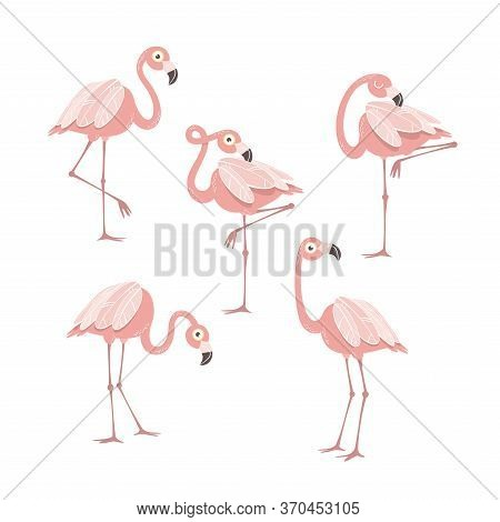 Cartoon Pink Flamingo Set. Design Elements For Fabric And Decor.