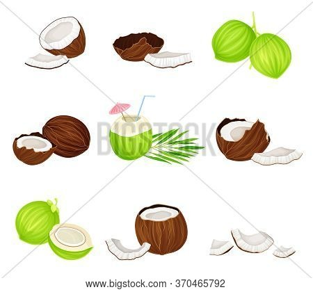 Whole And Cracked Coconut With Hard Shell And Fibrous Husk Vector Set