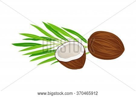Whole And Halved Coconut With Hard Shell And Fibrous Husk Showing White Inner Flesh And Palm Leaf Ve