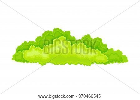 Green Bush Or Shrub With Leafy Crown As Forest Element Vector Illustration