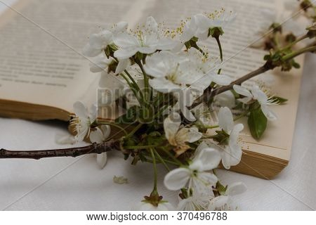 Open Book With Blossan Open Book With Cherry Tree Blossom Branches. Leisure Time And Home Lifestyle