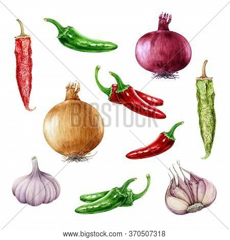 Onion, Garlic, Chili And Jalapeno Pepper Watercolor Set. Hand Drawn Realistic Raw And Dry Spicy Vege