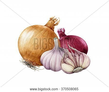 Onion Golden And Red Bulb With Garlic Watercolor Illustration. Realistic Vegetable Roots Hand Drawn